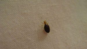 7 tips to prevent bed bugs in your home